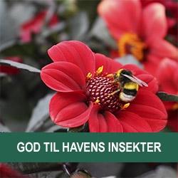 Insektvenlige Blomster