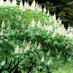 Specielle buske