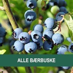 Alle frugtbuske