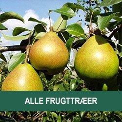 Alle frugttræer