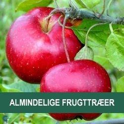 Almindelige frugttræer