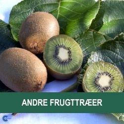 Andre frugttræer