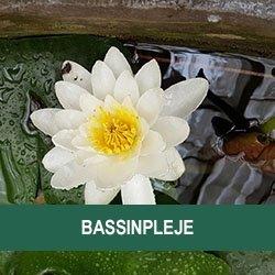 Bassinpleje