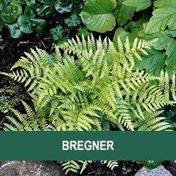 Bregner