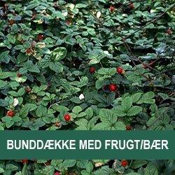 Bunddække med Frugt/Bær