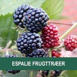 priser på frugttræer