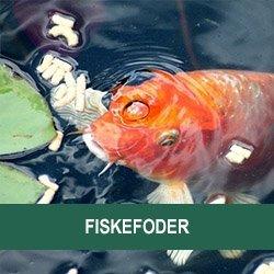 Fiskefoder
