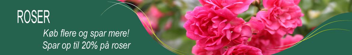 Flower Circus roser
