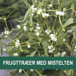 Frugttræer med mistelten