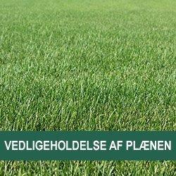 Vedligeholdelse af din græsplæne