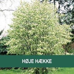 Høje hække/buske