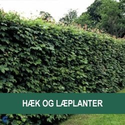 Hæk og læplanter