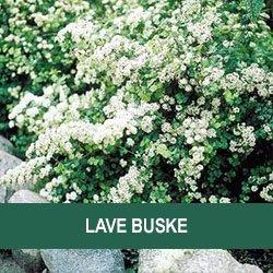 storblomstrende buske