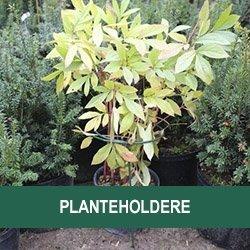 Planteholdere