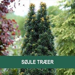 Søjle træer