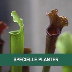 Specielle planter
