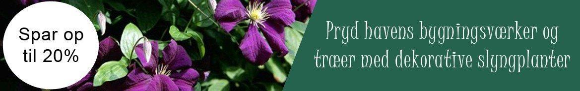 Slyngplanter velegnet til hegn/pergola
