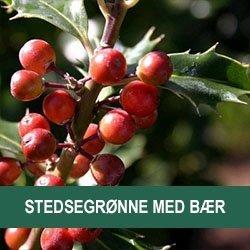 Bær/Frugt/Kogler