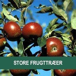 Store frugttræer