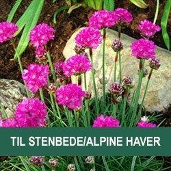 Stauder til stenbede/alpine haver