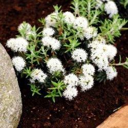 Surbundsplanter til stenbede