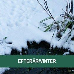 Efterår/Vinter