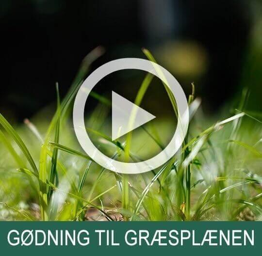 Pleje af græsplæne