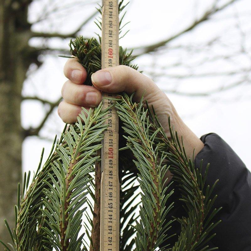 Grenkransen på et juletræ