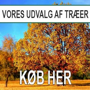 Banner træer
