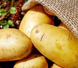 Bestil læggekartofler