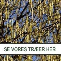 Udvalg af træer hos Jespers Planteskole