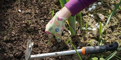 Plantning