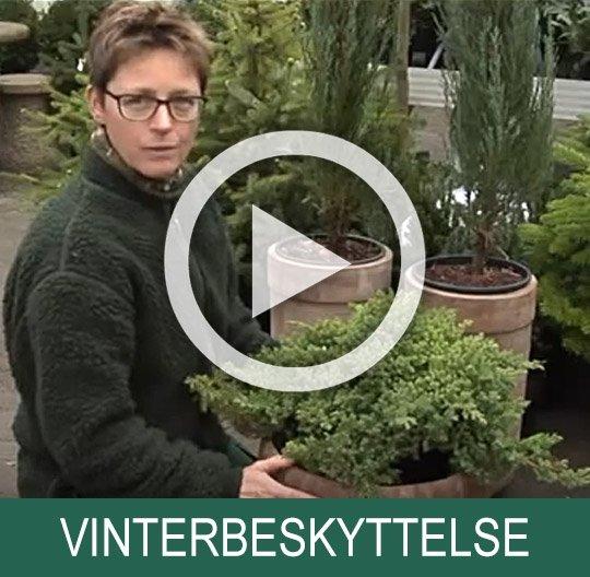 Vinterbeskyttelse